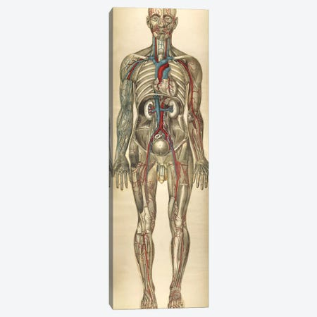 The Human Body With Superimposed Colored Plates VI Canvas Print #TRK2703} by National Library of Medicine Canvas Print