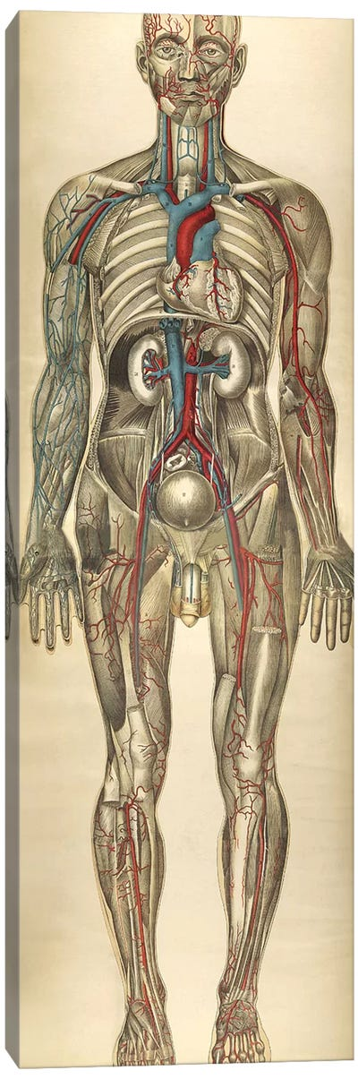The Human Body With Superimposed Colored Plates VI Canvas Art Print