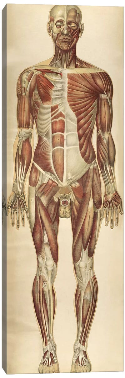The Human Body With Superimposed Colored Plates VII Canvas Art Print