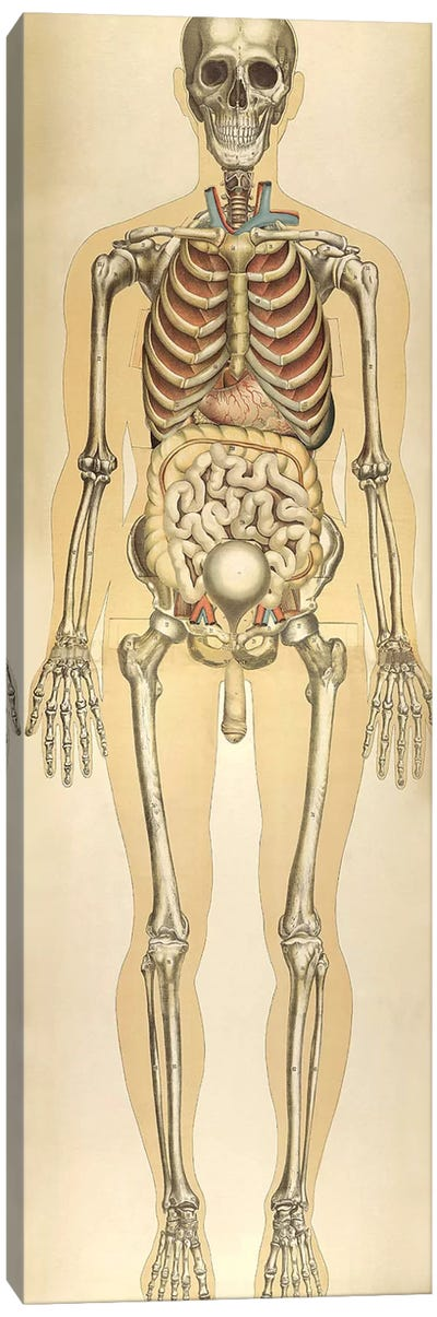 The Human Body With Superimposed Colored Plates VIII Canvas Art Print