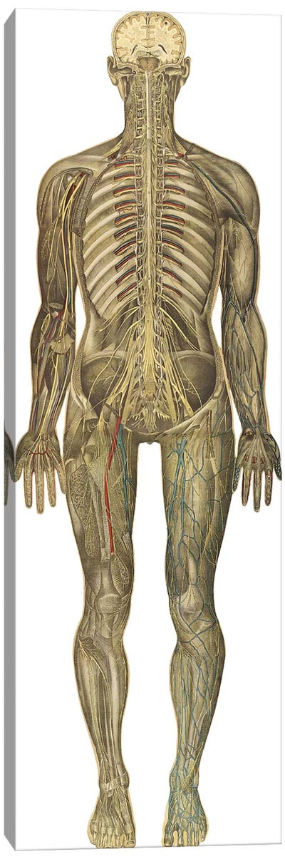 The Human Body With Superimposed Colored Plates IX Canvas Art Print