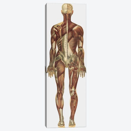The Human Body With Superimposed Colored Plates X Canvas Print #TRK2707} by National Library of Medicine Canvas Art