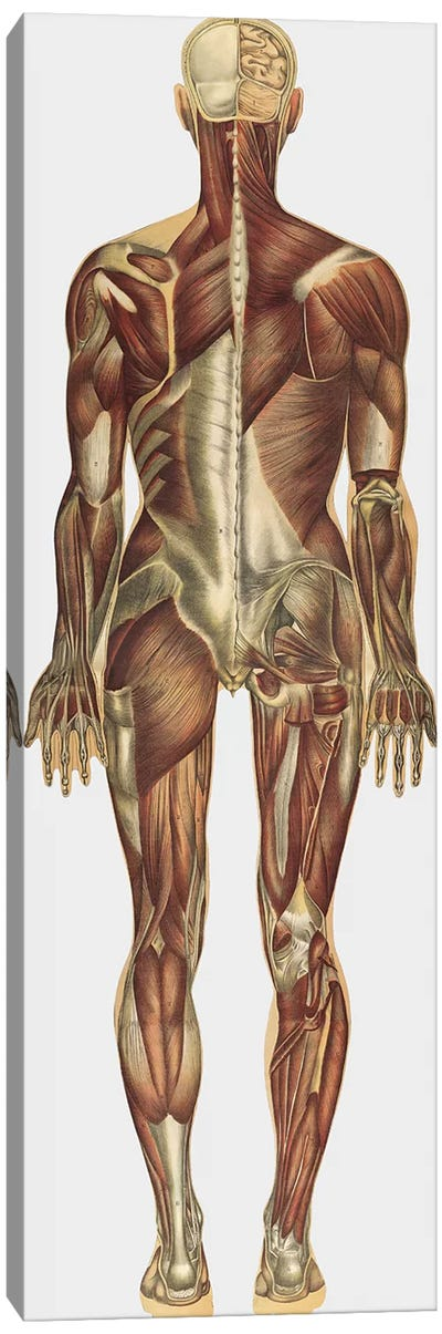 The Human Body With Superimposed Colored Plates X Canvas Art Print