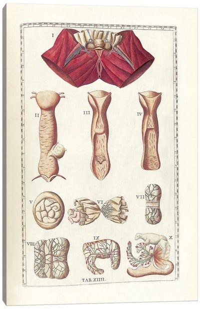 The Science Of Human Anatomy I Canvas Art Print