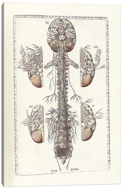The Science Of Human Anatomy III Canvas Art Print