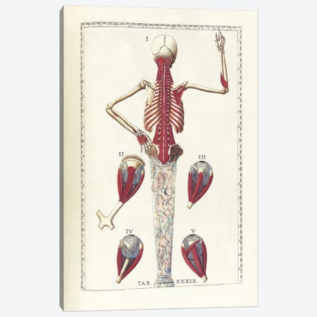 The Science Of Human Anatomy IV Canvas Print #TRK2711} by National Library of Medicine Canvas Artwork