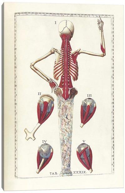 The Science Of Human Anatomy IV Canvas Art Print