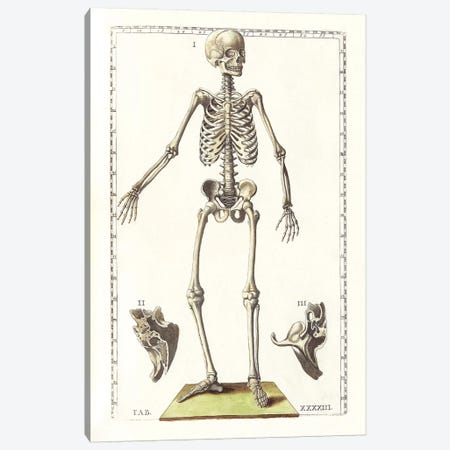 The Science Of Human Anatomy V Canvas Print #TRK2712} by National Library of Medicine Canvas Artwork
