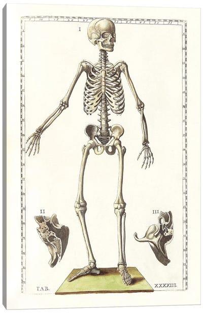 The Science Of Human Anatomy V Canvas Art Print