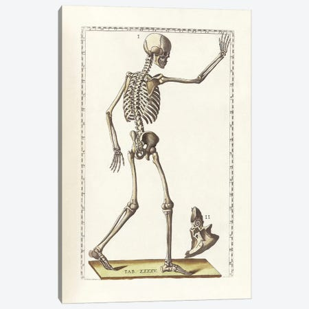 The Science Of Human Anatomy VI Canvas Print #TRK2713} by National Library of Medicine Canvas Art