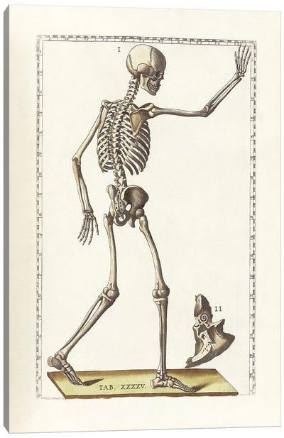 The Science Of Human Anatomy VI Canvas Art Print