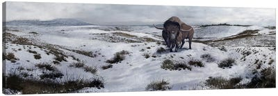A Bison Latifrons In A Winter Landscape During The Pleistocene Epoch Canvas Art Print