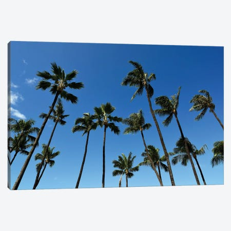 Palm Trees Against A Clear Blue Sky In Maui, Hawaii Canvas Print #TRK2756} by Stocktrek Images Canvas Art Print