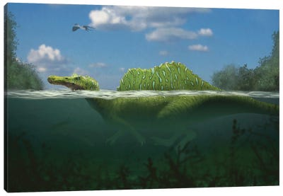 Spinosaurus swimming in a river. Canvas Art Print