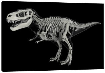 Skeletal system of Tyrannosaurus rex, side view. Canvas Art Print