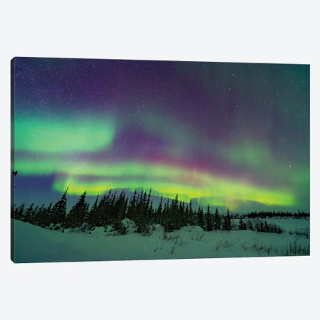 The Pastel Colours Of The Aurora Borealis Over A Boreal Forest In Churchill, Manitoba, Canada. Canvas Print #TRK3232} by Alan Dyer Canvas Wall Art