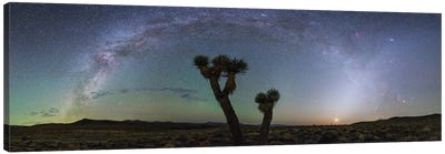 Milky Way Arc And Zodiacal Light Above A Joshua Tree In Death Valley National Park. Canvas Art Print