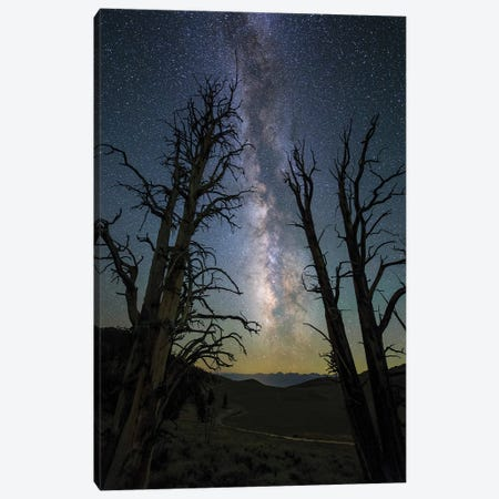 The Milky Way And Ancient Bristlecone Pine. Canvas Print #TRK3350} by Jeff Dai Canvas Print