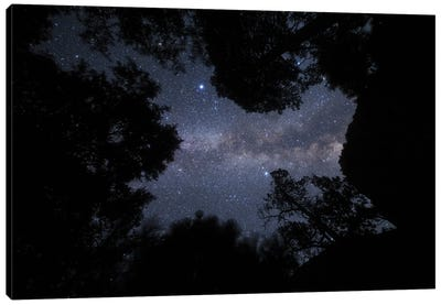 The Milky Way Appears Overhead In A Forest In California. Canvas Art Print