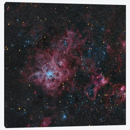 Tarantula Nebula Canvas Print #TRK3389} by Michael Miller Canvas Art