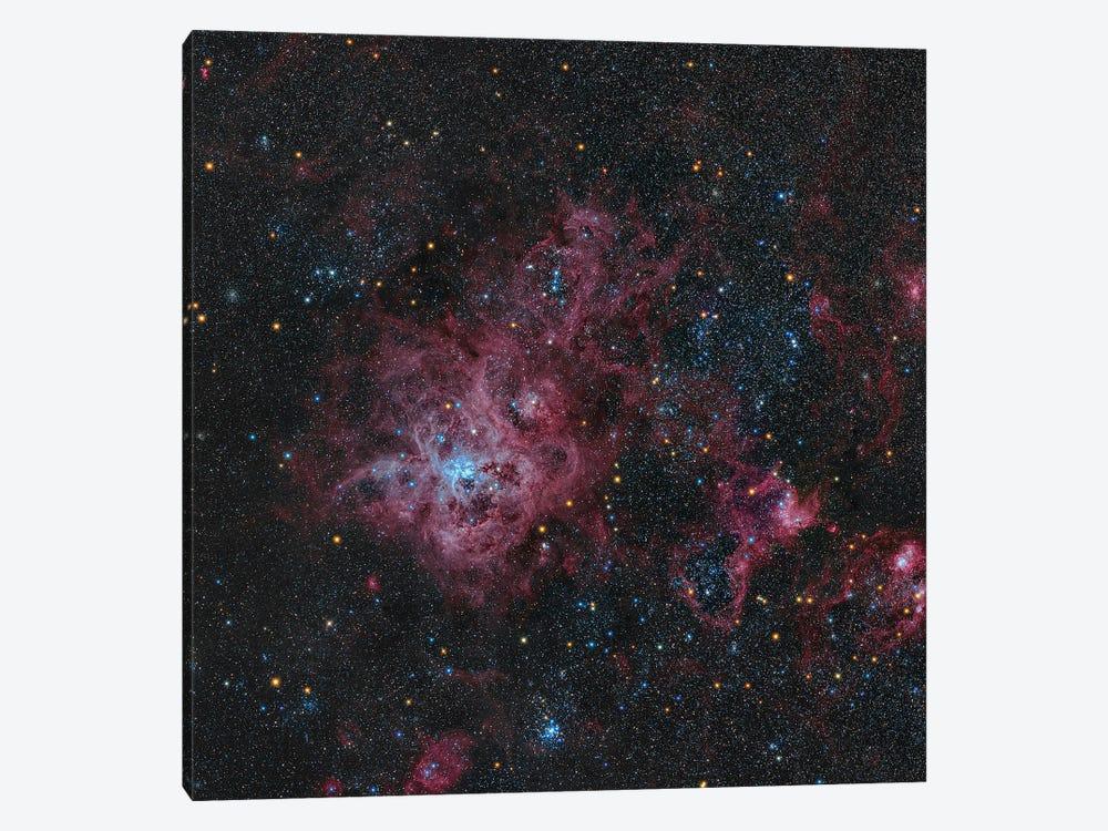 Tarantula Nebula by Michael Miller 1-piece Canvas Art