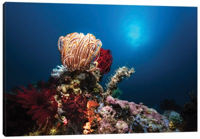 Collection Of Crinoids, Sponges And Corals In The Philippines Canvas Art Print