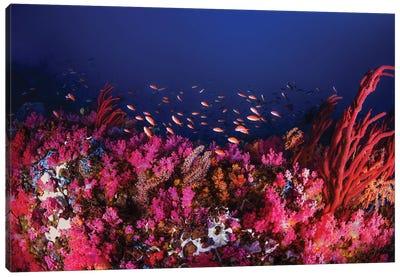 Colorful Reef Scene With Anthias Fish In Puerto Galera, Philippines Canvas Art Print