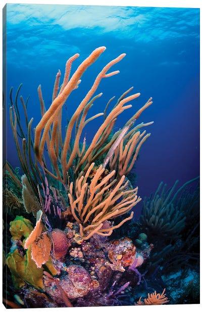 Coral Reef Scene In Bonaire, Caribbean Netherlands Canvas Art Print