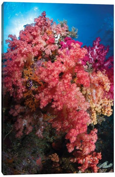 Soft Coral In Raja Ampat, Indonesia I Canvas Art Print