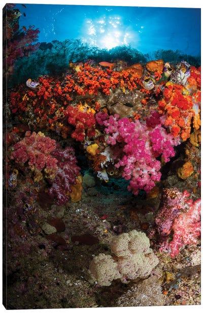 Soft Coral In Raja Ampat, Indonesia II Canvas Art Print