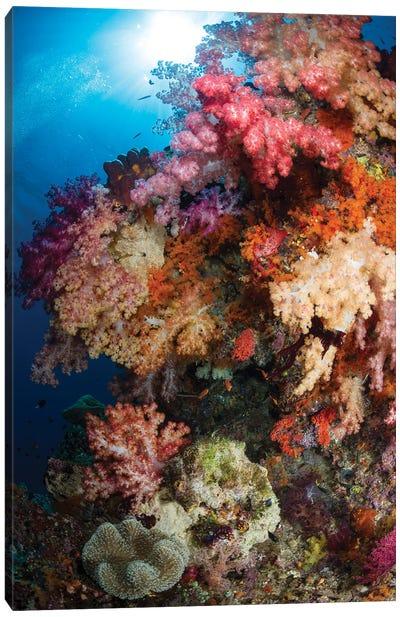 Soft Coral In Raja Ampat, Indonesia III Canvas Art Print