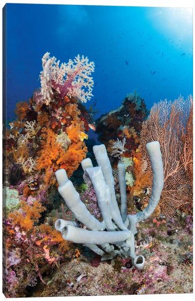 Tube Sponge On Coral Reef In Raja Ampat, Indonesia Canvas Art Print