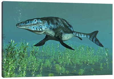 Mosasaur Swimming In The Meuse River Canvas Art Print