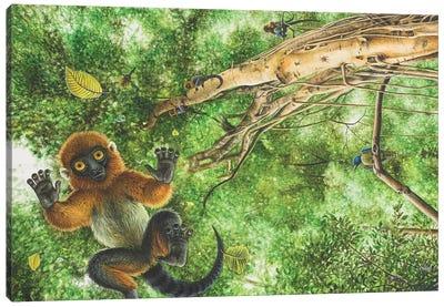 Darwinius Masillae Falls From The Tops Of The Trees Canvas Art Print