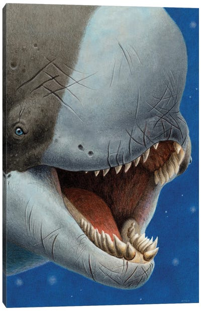 Livyatan Melvillei, An Extinct Species Of Whale With Enormous Teeth Canvas Art Print