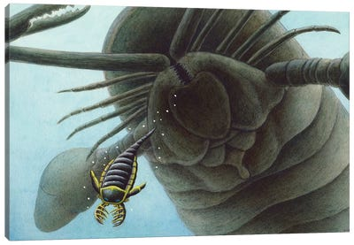 Giant Sea Scorpion Pterygotus Is Having A Go At A Young Mixopterus Kiaeri In Silurian Seas Canvas Art Print