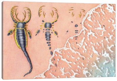 A Dead Sea Scorpion Mixopterus Kiaeri Is Slowly Covered By Sand Carried By The Waves Canvas Art Print