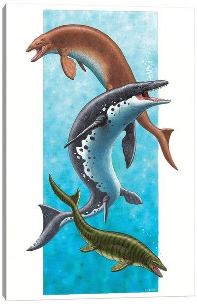 Three Species Of Mosasaur: Plioplatecarpus, Mosasaurus Hoffmannii And Carinodens Canvas Art Print