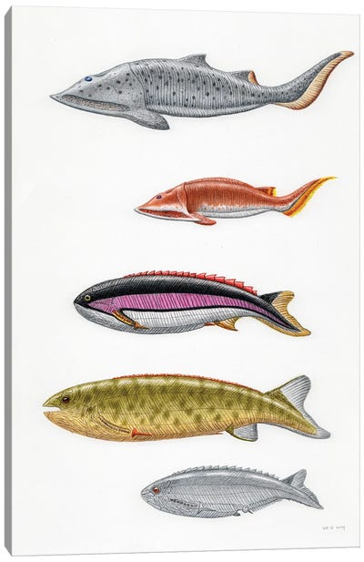 Silurian Fish From Norway: Aceraspis, Micraspis, Pterolepis, Pharyngolepis, Rhyncholepis Canvas Art Print