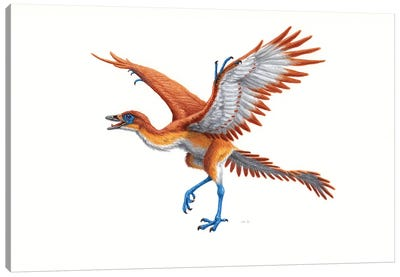 Archaeopteryx, Side View On White Background Canvas Art Print