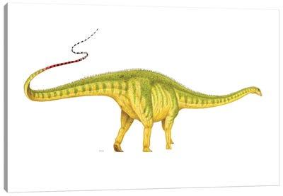 Diplodocus Dinosaur, Side View On White Background Canvas Art Print