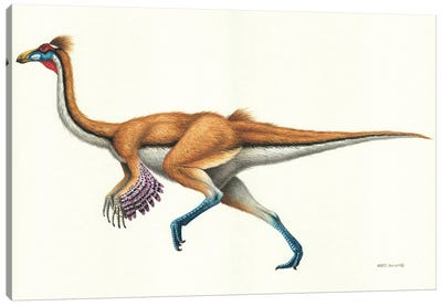 Gallimimus Dinosaur, Side View On White Background Canvas Art Print