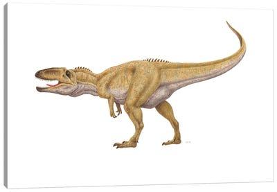 Giganotosaurus Dinosaur, Side View On White Background Canvas Art Print