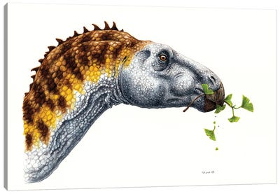 Hadrosaurus Dinosaur Eating Foliage, On White Background Canvas Art Print