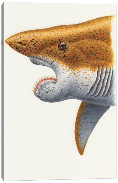 Helicoprion Shark, Headshot On White Background Canvas Art Print