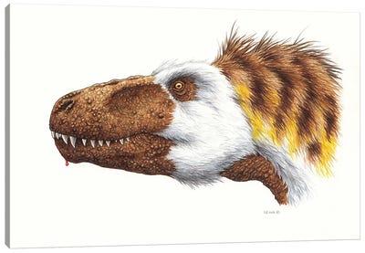 Megalosaurus Dinosaur Head, On White Background Canvas Art Print