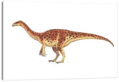 Plateosaurus Dinosaur, Side View On White Background Canvas Art Print