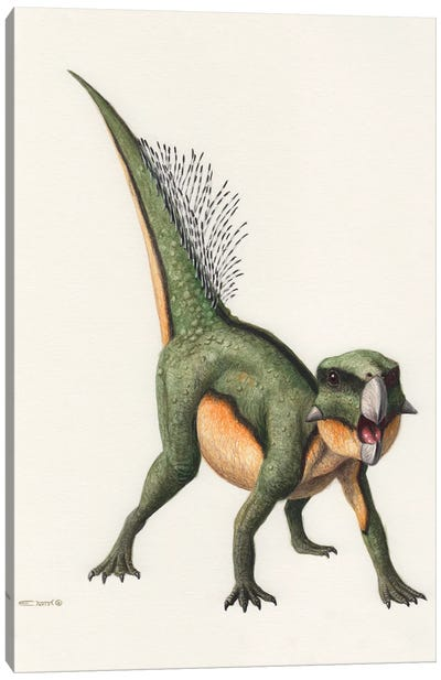 Psittacosaurus Dinosaur, Front View On White Background Canvas Art Print