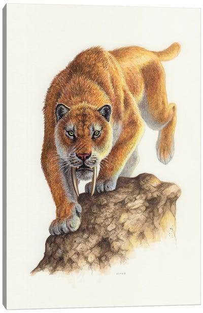 Smilodon On The Prowl, Front View Canvas Art Print