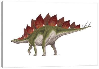 Stegosaurus Dinosaur, Side View On White Background Canvas Art Print